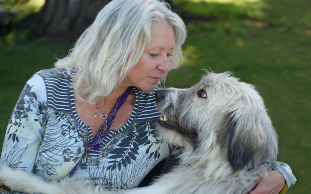 First Romanian rescue assistance dog in the world to fly back to Romania – by Tess Wolfie